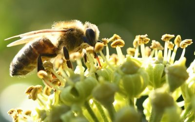 Neonicotinoid Pesticides have contamined 75% of the global honey samples